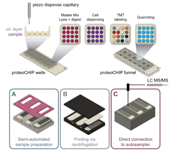 graph - An automated workflow for label-free and multiplexed single cell proteomics sample preparation at unprecedented sensitivity